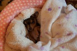 Chloe - sleeping beauty
