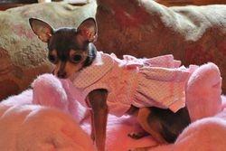 Chloe - pink princess