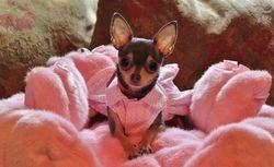 Chloe - pink princess 3