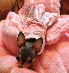 Chloe - pink princess 4