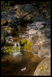 Blossom Fall
