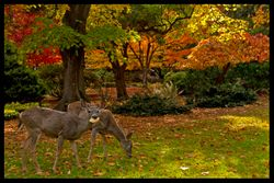 Deer with Leaf