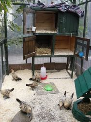 booteds aviary