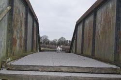Ruby the jack russel on the footbridge