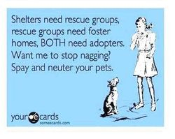 Adopters needed.