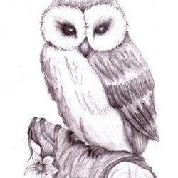 OWLLLLL