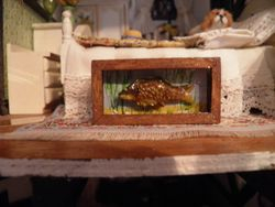 Fish taxidermy and case.