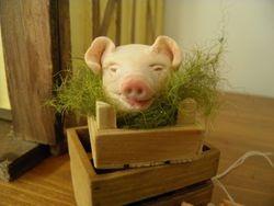 Pigs head.