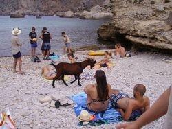 drugari sa plaze