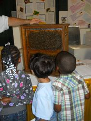 Kids love bees