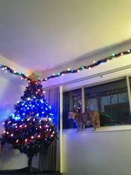 O Christmas tree O christmas tree...