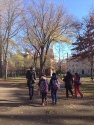 Walking through Harvard Yard