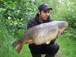 20+ common for Andy