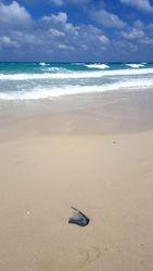 Playa del Este