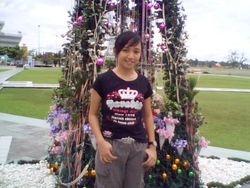 Pokok Kristmas di Sibu.