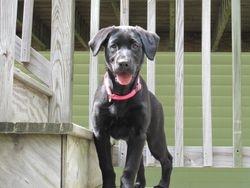 Abby on the deck
