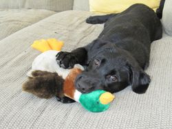 Abby and her duck