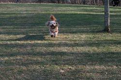 Luc on a big run