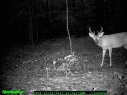lil buck