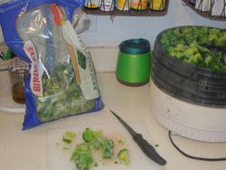 DIY Dehydrating Broccoli