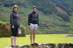 Polja pirinca