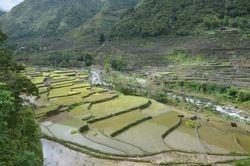 pirincane terase stare 2000 godina
