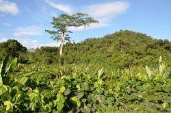 duboko u dzungli - Palawan