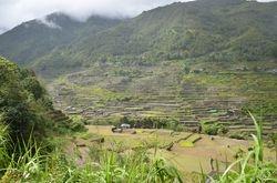 terase pirincanih polja - Banaue