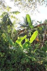 priroda Palawan-a