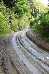 put kroz dzunglu