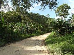 priroda na Palawanu