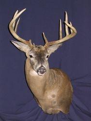 2005 Ontario Buck