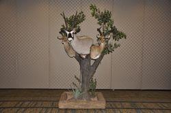 Pedestal Impalas and Oryx