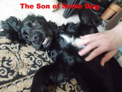 The Son of Smile Dog