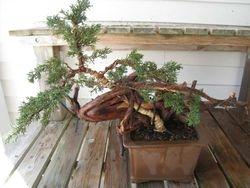 Finished Tree after workshop