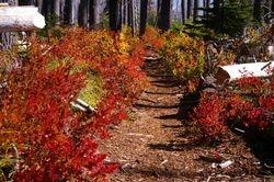 Monon Lake Trail