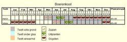 Teeltschema Boerenkool