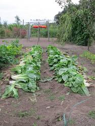 moestuin 23-9-2012
