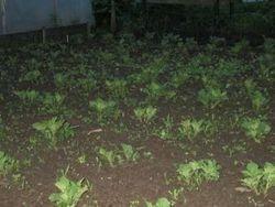 12-5 aardappelen