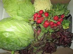 11-5 oogst