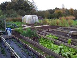 De tuin in november