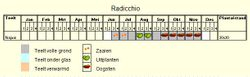 Teeltschema Radicchio