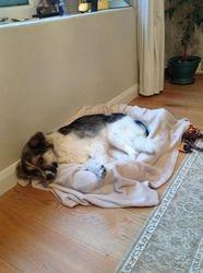 Chloe one week after arrival in UK June