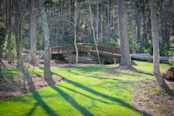 Curved Bridge and Stream