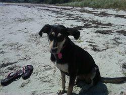 Dog beach LBI