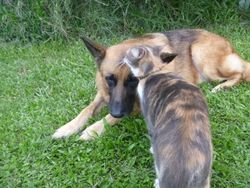 Tilda grooming Max in the yard