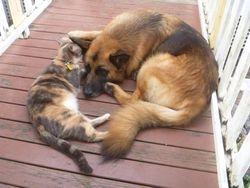 Tilda, the dog whisperer