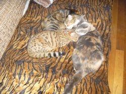 Tiger & Tilda grooming Benny