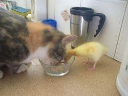 Tilda & Dorothy having lunch together