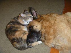 Max using Tilda as a pillow